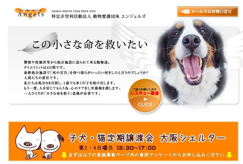 犬の里親になりたい 里親になれる条件や 東京 大阪 福岡の里親募集