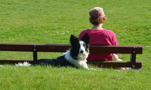 ボーダーコリー,犬,芝生