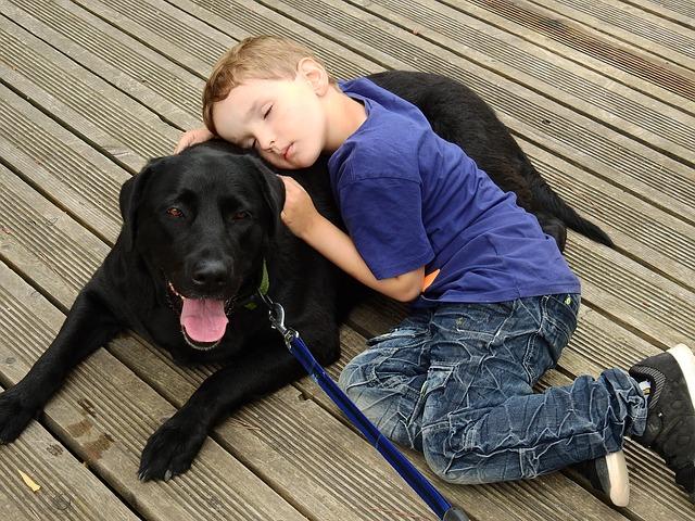 ラブラドールレトリバー,黒い犬,子どもと犬