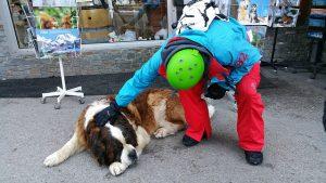 セントバーナード,大型犬,ハイジ,スイス