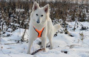 白い犬,雪