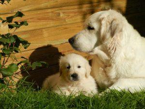 犬,赤ちゃん
