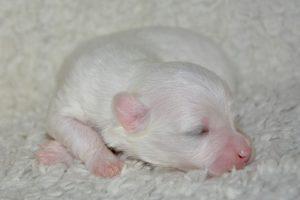 出産,犬,赤ちゃん
